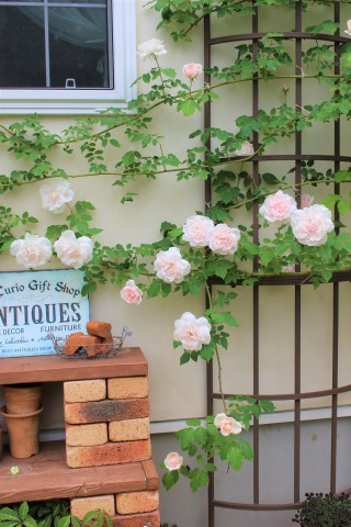 バラの開花が次々と♪_e0341606_22392984.jpg