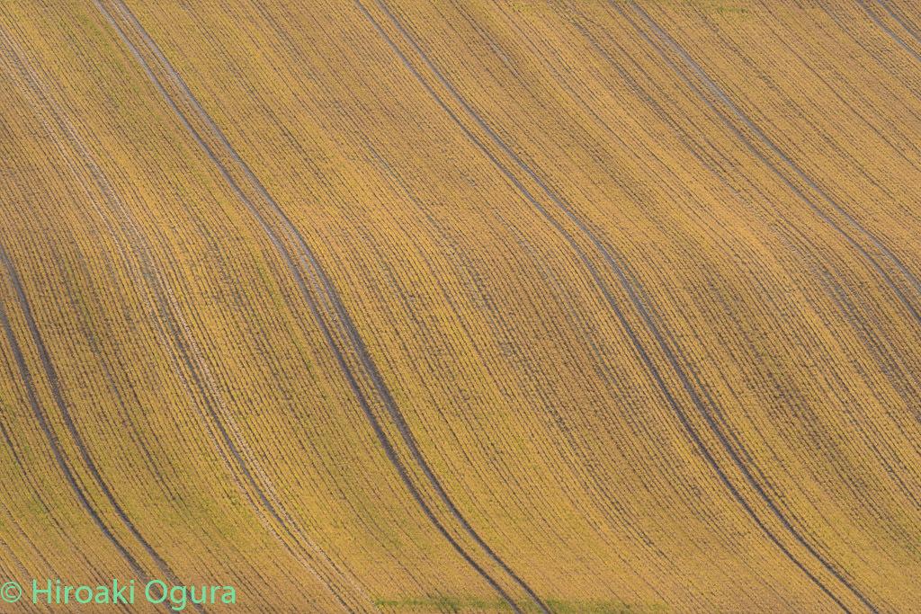 畑の曲線。_e0025030_14564040.jpg
