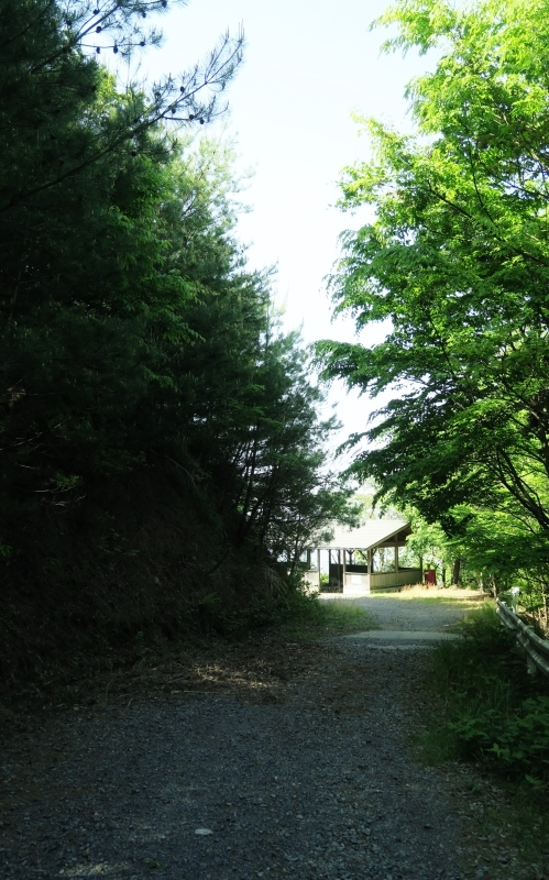 ひとり山歩き再開!優しい新緑に包まれて _e0348754_08034545.jpg