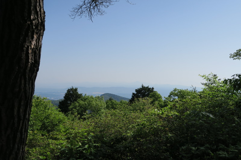 ひとり山歩き再開!優しい新緑に包まれて _e0348754_08060820.jpg
