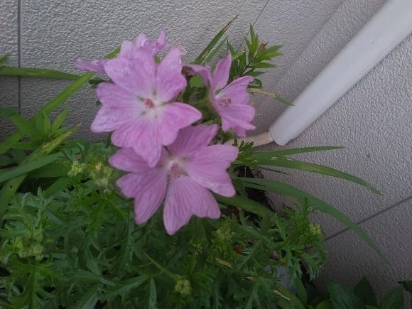 この花の名は?_d0116059_13421077.jpg