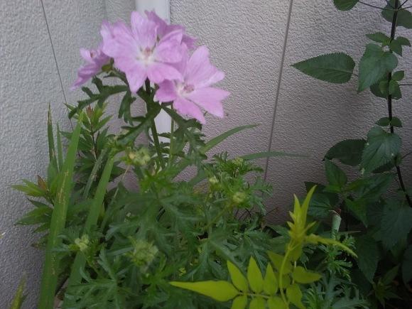 この花の名は?_d0116059_13433624.jpg