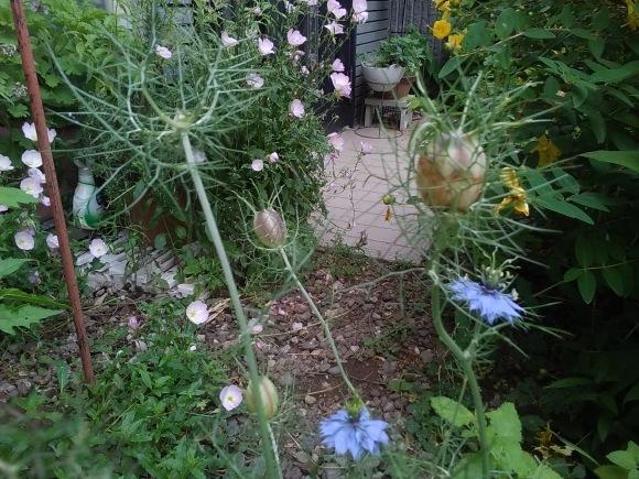 この花の名は?_d0116059_13461958.jpg