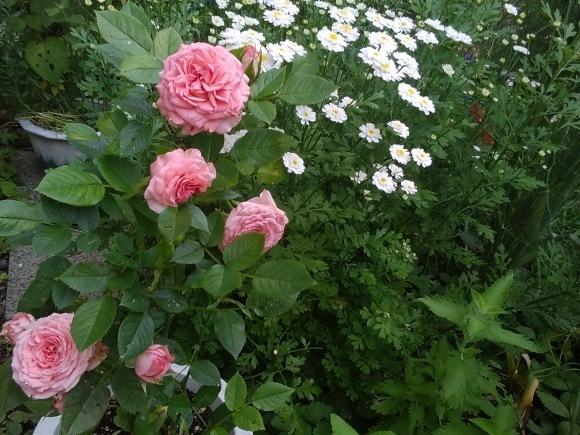 この花の名は?_d0116059_13513559.jpg