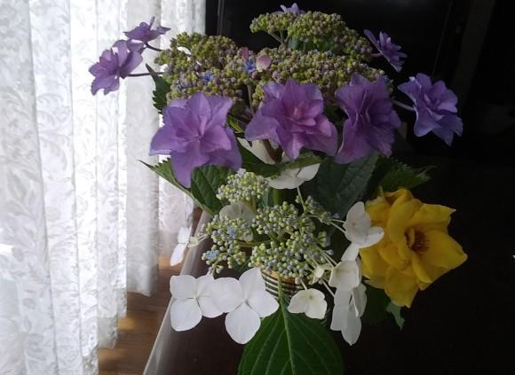 この花の名は?_d0116059_14044142.jpg