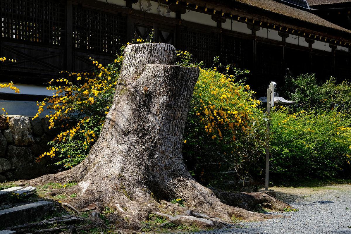 松尾大社_f0021869_22202650.jpg