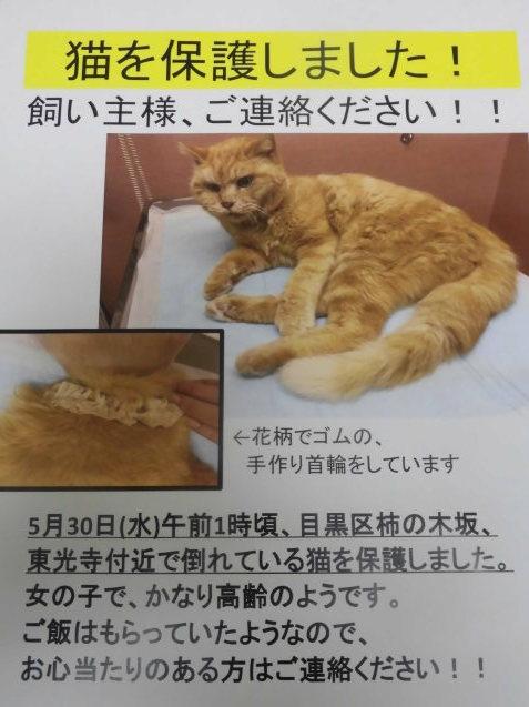 猫ちゃん、保護しています_e0367571_21120891.jpg