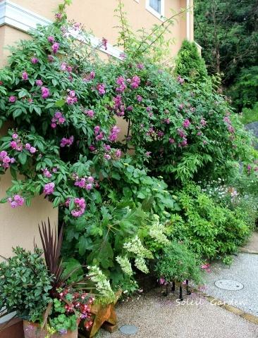 ◆素敵なお庭訪問・・・再びSさんのお庭3 & Rochetさんのお庭3_e0154682_22232749.jpg
