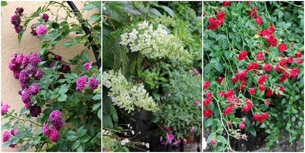 ◆素敵なお庭訪問・・・再びSさんのお庭3 & Rochetさんのお庭3_e0154682_22240484.jpg