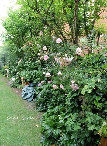 ◆素敵なお庭訪問・・・再びSさんのお庭3 & Rochetさんのお庭3_e0154682_22251720.jpg