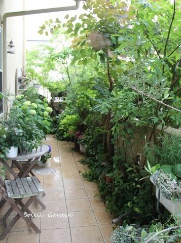 ◆素敵なお庭訪問・・・再びSさんのお庭3 & Rochetさんのお庭3_e0154682_22561001.jpg