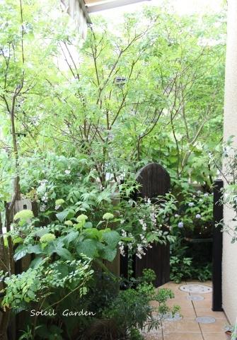 ◆素敵なお庭訪問・・・再びSさんのお庭3 & Rochetさんのお庭3_e0154682_22563086.jpg
