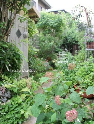 ◆素敵なお庭訪問・・・再びSさんのお庭3 & Rochetさんのお庭3_e0154682_22571418.jpg