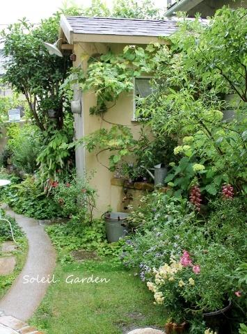 ◆素敵なお庭訪問・・・再びSさんのお庭3 & Rochetさんのお庭3_e0154682_23015237.jpg