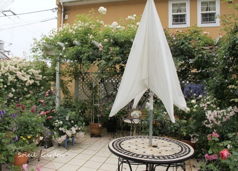 ◆素敵なお庭訪問・・・再びSさんのお庭3 & Rochetさんのお庭3_e0154682_23261940.jpg
