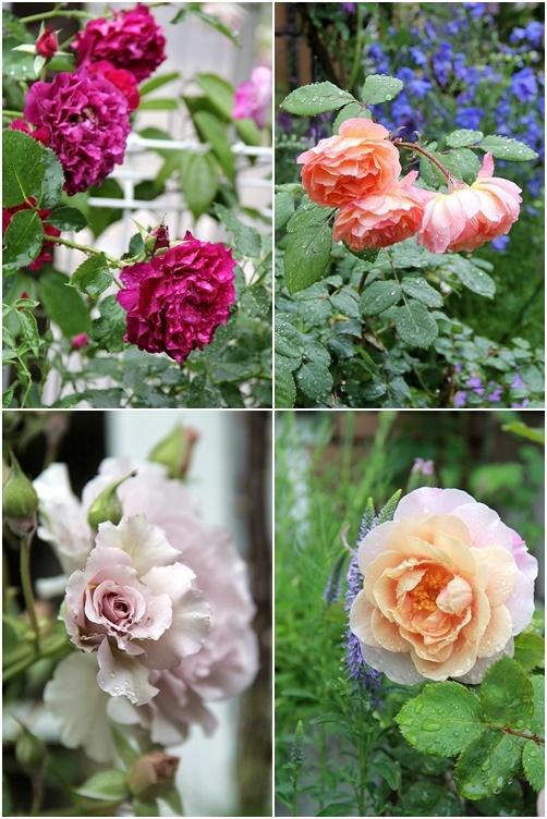 ◆素敵なお庭訪問・・・再びSさんのお庭3 & Rochetさんのお庭3_e0154682_23273066.jpg