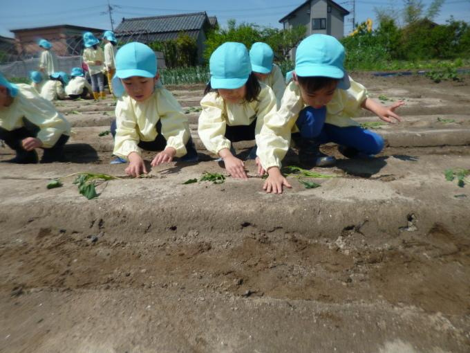 楽しかった!~イチゴ狩り 芋苗植え~_f0195982_16285678.jpg