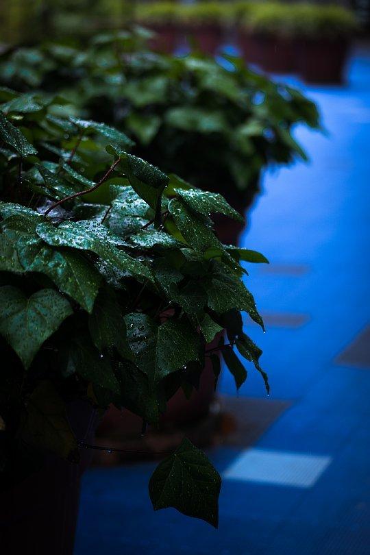 Here\'s That Rainy Day_d0353489_23502984.jpg