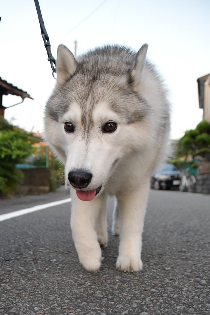 はなちゃんと行く花めぐりのお散歩 (*^_^*)_c0049299_21181257.jpg