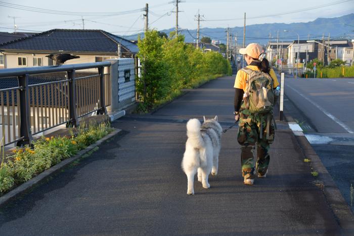 はなちゃんと行く花めぐりのお散歩 (*^_^*)_c0049299_21265296.jpg