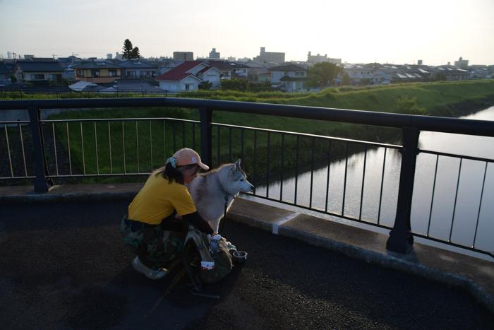 はなちゃんと行く花めぐりのお散歩 (*^_^*)_c0049299_21275889.jpg