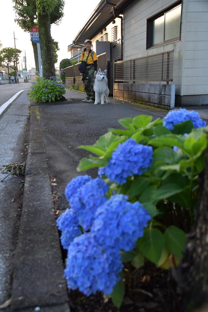 はなちゃんと行く花めぐりのお散歩 (*^_^*)_c0049299_21303264.jpg