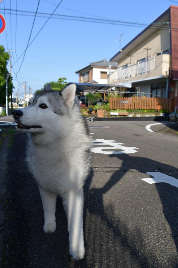 はなちゃんと行く花めぐりのお散歩 (*^_^*)_c0049299_21383036.jpg