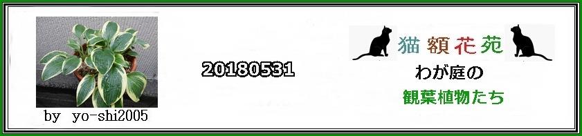 e0033229_1865799.jpg