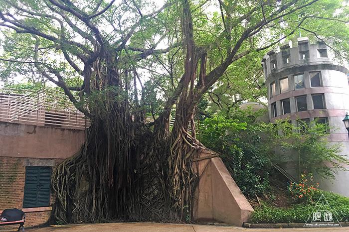 594 Kowloon Park ~大都会でバードウォッチング~_c0211532_18163976.jpg