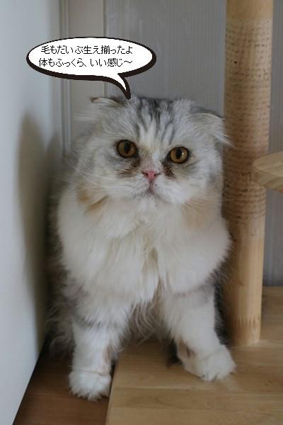 お手入れ必須な保護猫さん_e0151545_20533103.jpg