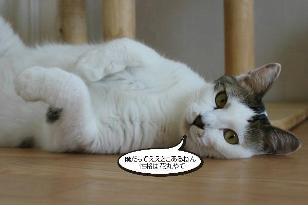 お手入れ必須な保護猫さん_e0151545_20561800.jpg