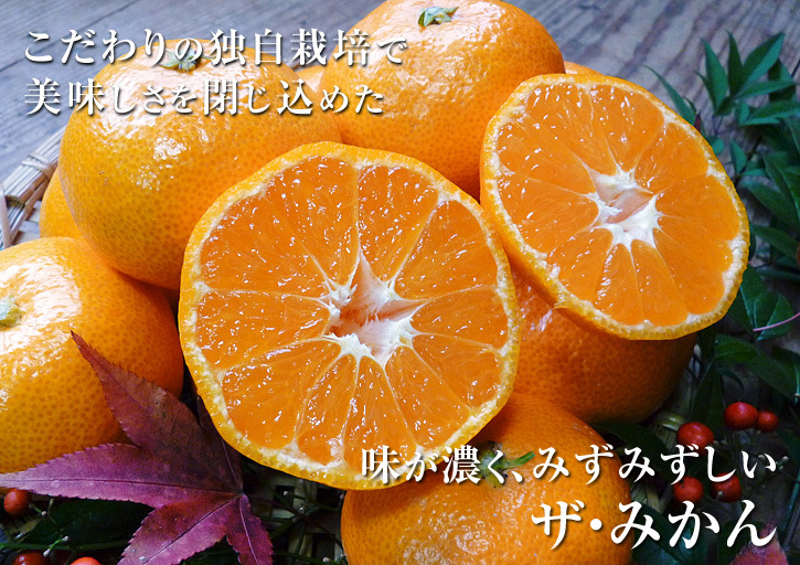 ザ・みかん 平成30年度の花の様子と極早生みかん販売中止のお知らせ_a0254656_17301108.jpg
