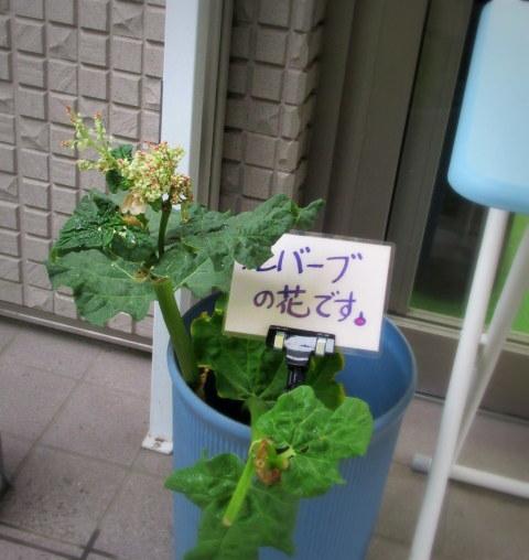 春のルバーブジャム * 地場野菜 EM自然農法 田七屋_f0236260_21023603.jpg