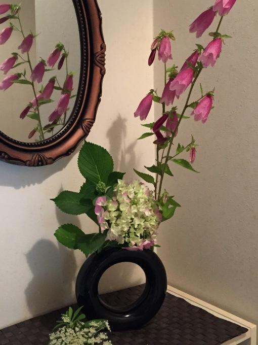 教室の花、蛍袋、人参の花、アジサイ_a0125981_14305892.jpg