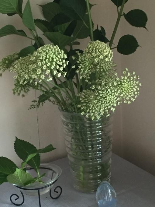 教室の花、蛍袋、人参の花、アジサイ_a0125981_14372675.jpg