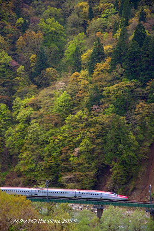 秋田新幹線こまち_d0027893_19140076.jpg