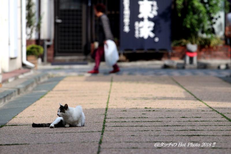 猫の休息_d0027893_19222251.jpg