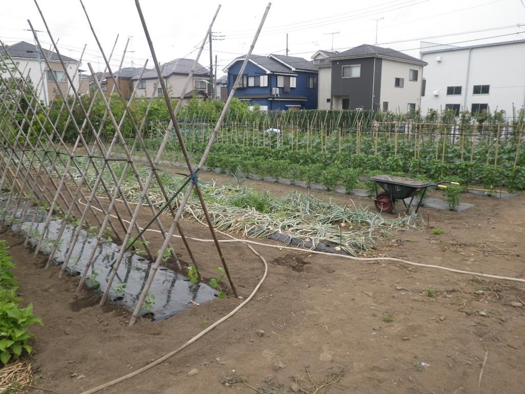 植木屋の野菜!!_b0172896_13045657.jpg