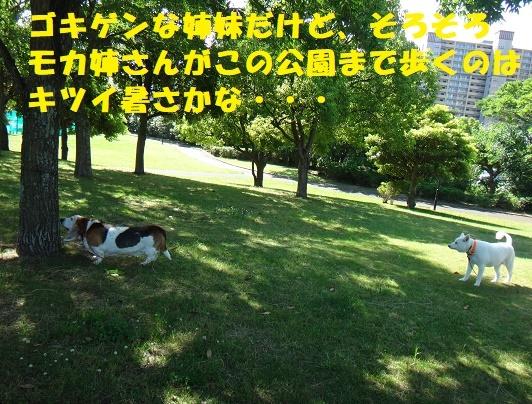 f0121712_15195696.jpg
