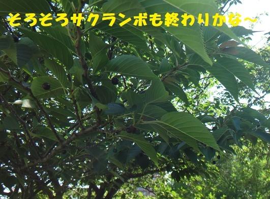 f0121712_15244338.jpg