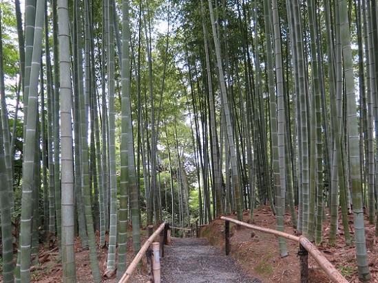京都、高台寺_c0192215_1820137.jpg