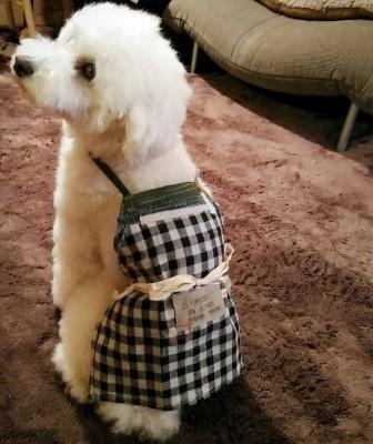 Hayseed 犬服受注会_f0325437_17304902.jpg