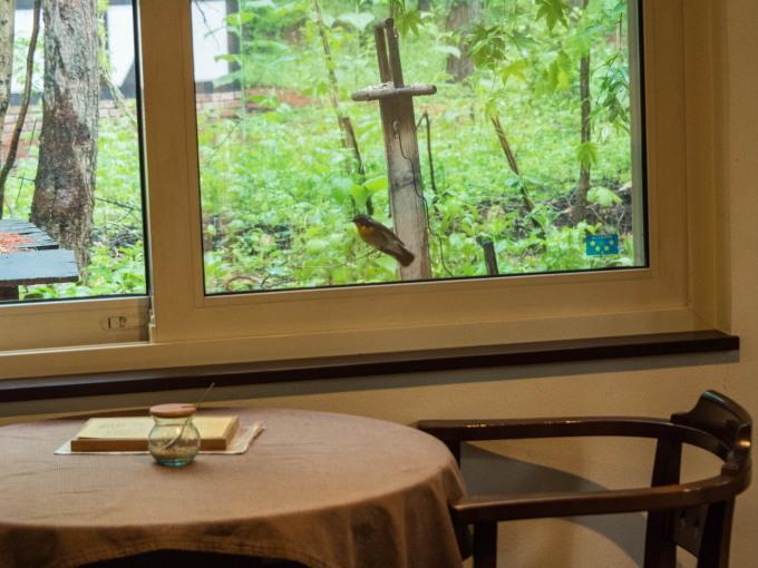 キビタキさんがカフェを覗いてる?・・新緑の季節です。_f0276498_22284406.jpg
