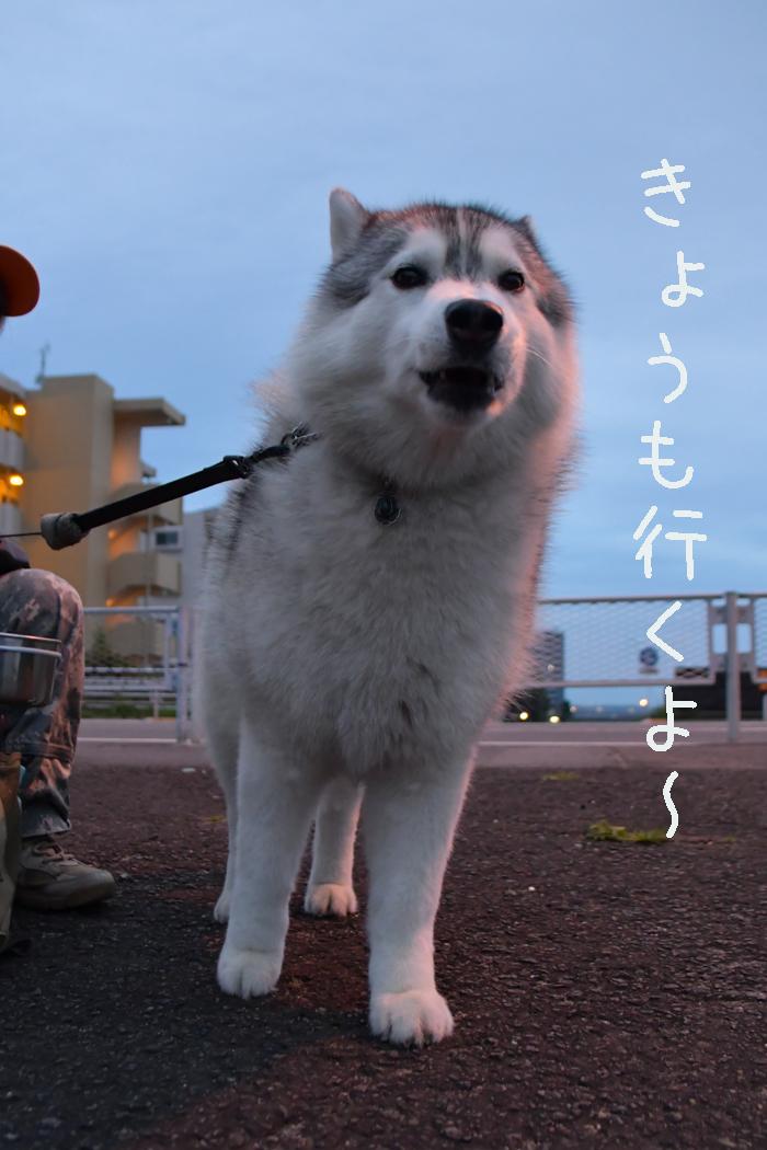 ジロちゃんとふれあい散歩 (*^_^*)_c0049299_21305108.jpg