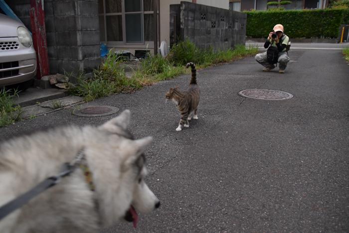 ジロちゃんとふれあい散歩 (*^_^*)_c0049299_21332982.jpg
