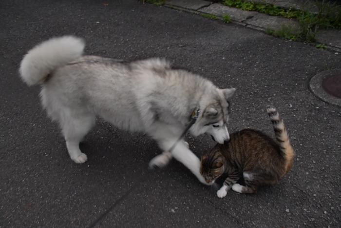 ジロちゃんとふれあい散歩 (*^_^*)_c0049299_21334986.jpg