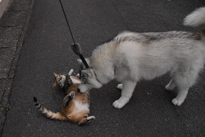 ジロちゃんとふれあい散歩 (*^_^*)_c0049299_21341748.jpg