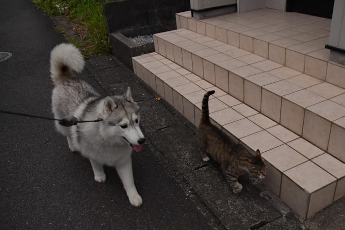 ジロちゃんとふれあい散歩 (*^_^*)_c0049299_21350038.jpg