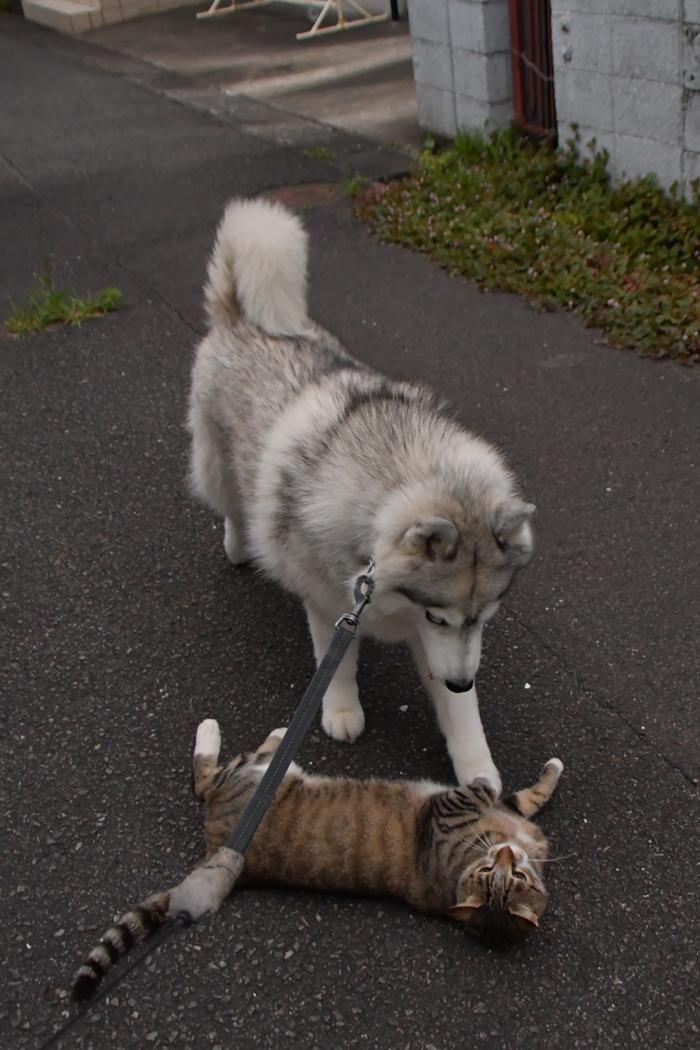 ジロちゃんとふれあい散歩 (*^_^*)_c0049299_21364164.jpg