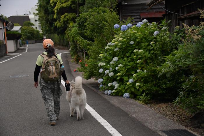 ジロちゃんとふれあい散歩 (*^_^*)_c0049299_21392933.jpg